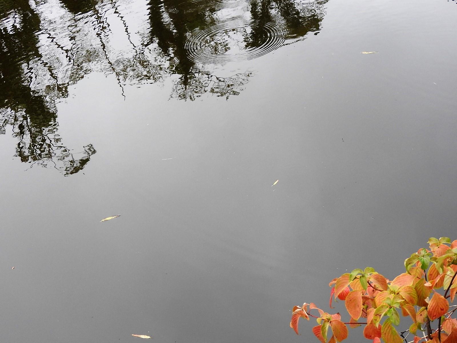 秋に礫を投げてみた。_e0406450_17504590.jpg