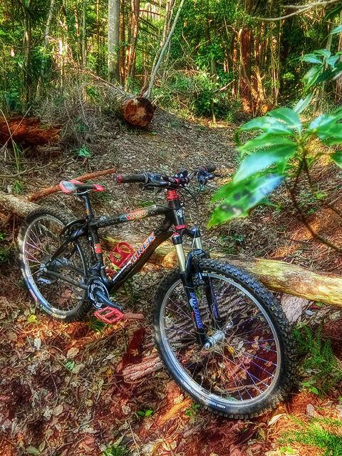 my home trail XXVII_b0049658_16540274.jpg