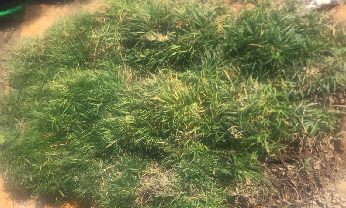 大豆の成長_b0270977_10365004.jpg