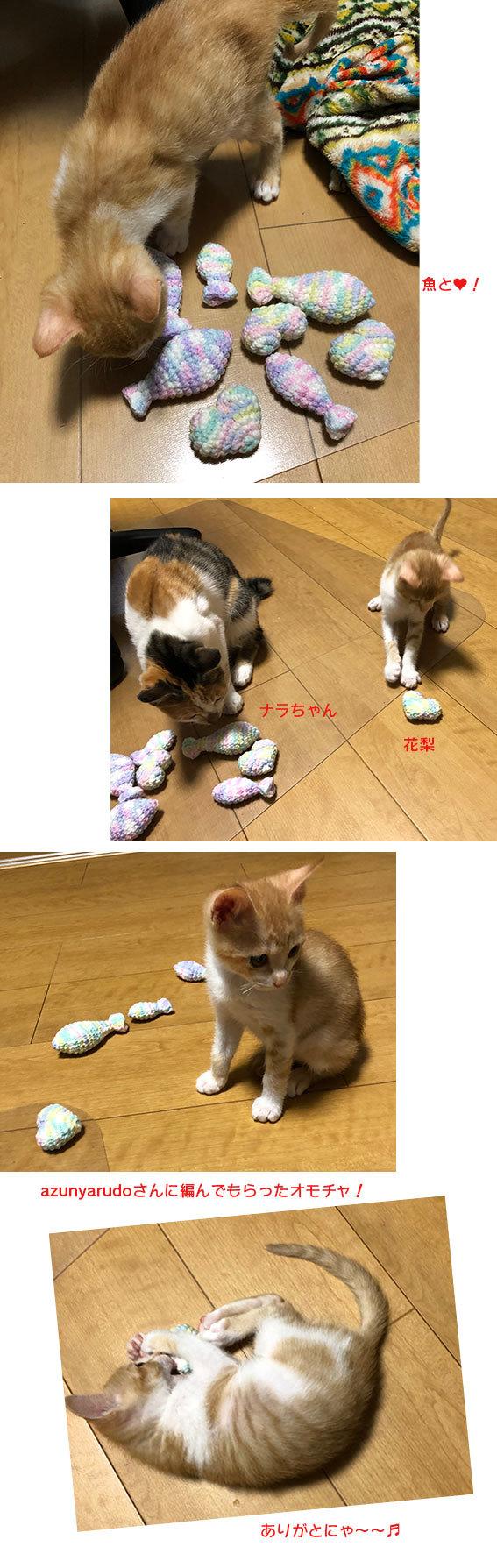 子猫のオモチャ&シュシュとアンジュ&ヨモギとフースケ&ミミちゃん通信_d0071596_23224940.jpg