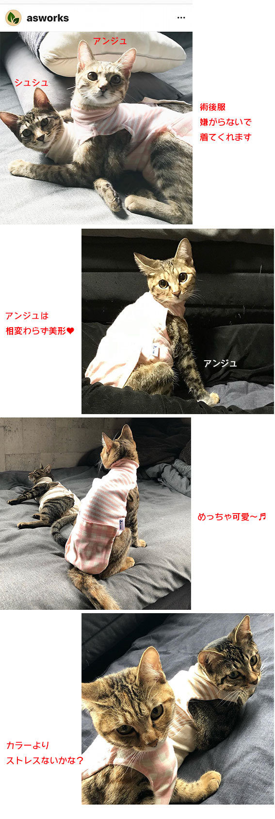 子猫のオモチャ&シュシュとアンジュ&ヨモギとフースケ&ミミちゃん通信_d0071596_23533749.jpg