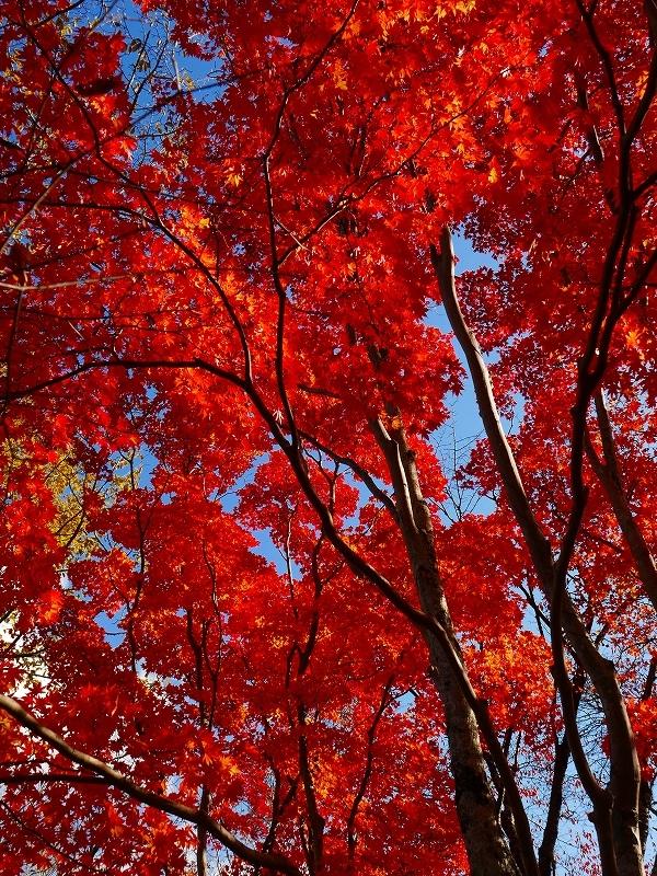 林東公園の紅葉、2019.10.23_f0138096_18161645.jpg