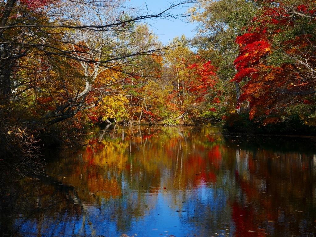 林東公園の紅葉、2019.10.23_f0138096_18162495.jpg