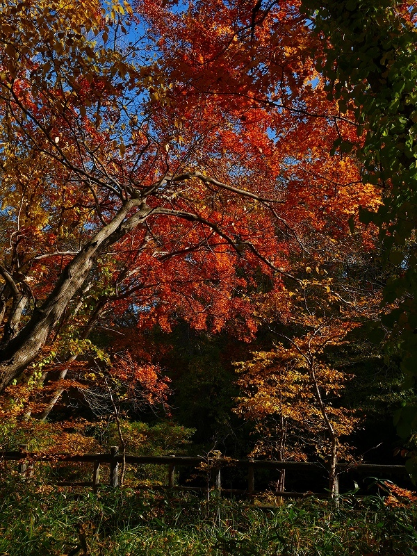 林東公園の紅葉、2019.10.23_f0138096_18162889.jpg