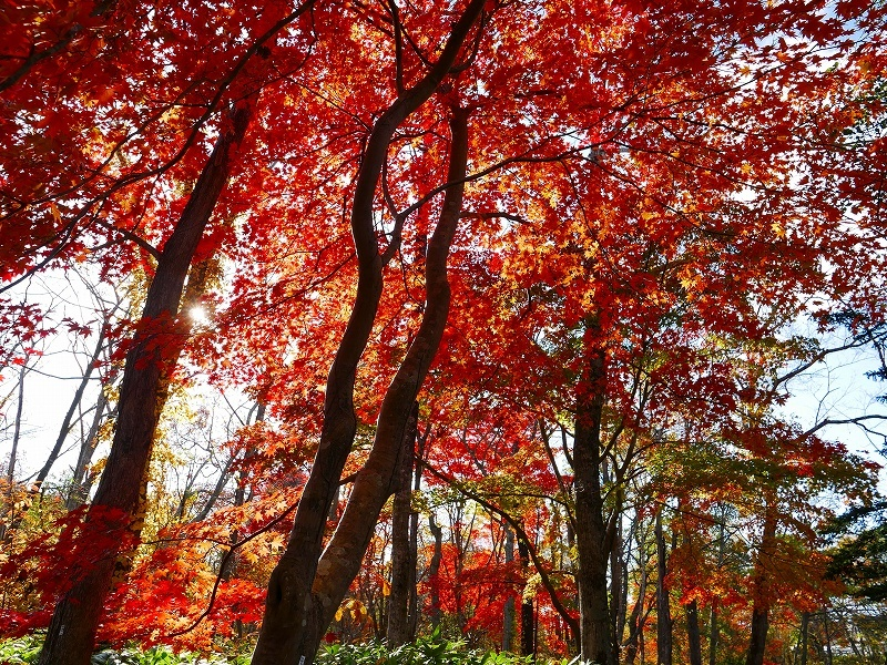 林東公園の紅葉、2019.10.23_f0138096_18163952.jpg