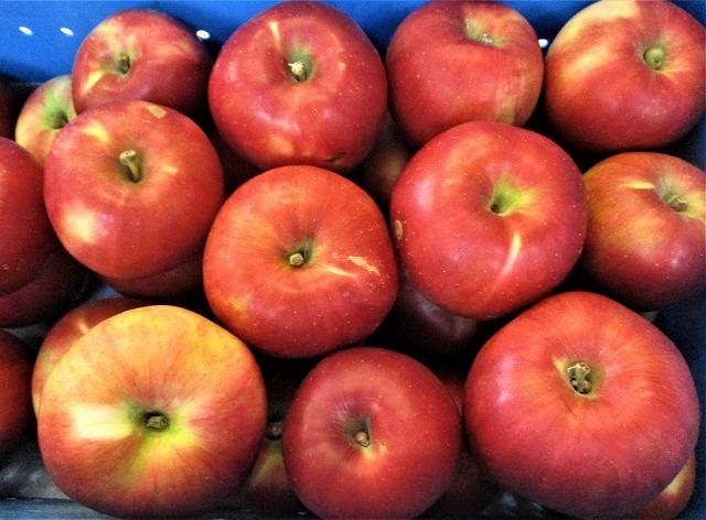 小野りんご園で紅玉 巨砲_b0163804_13591065.jpg