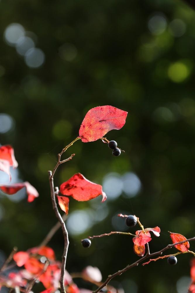 秋深まる_c0111229_18253435.jpg