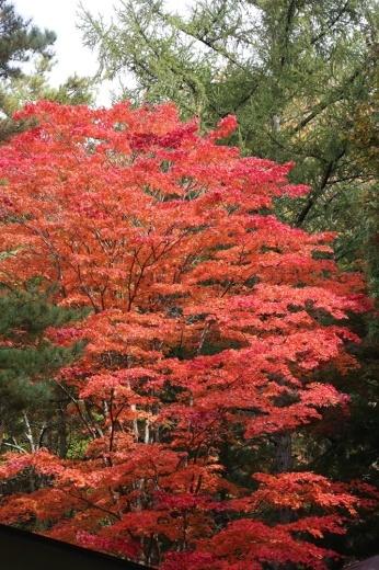 秋深まる_c0111229_18254147.jpg