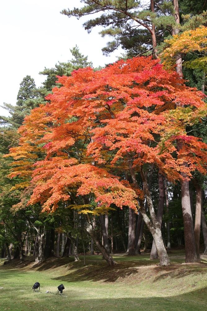 秋深まる_c0111229_18254851.jpg