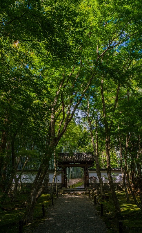 地蔵院~モシュ印/コケ寺リウム_e0363038_18482684.jpg