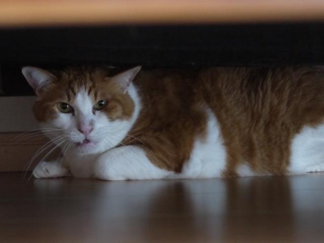 猫のお留守番 あずきくん編。_a0143140_21001360.jpg