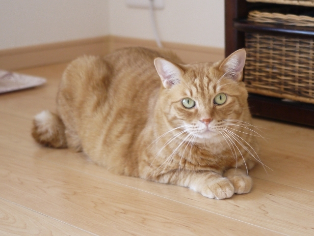 猫のお留守番 きなこくん編。_a0143140_21045691.jpg