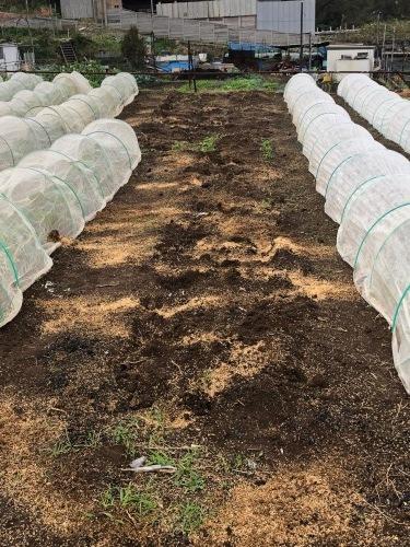 このところ台風 低気圧の連続で土が湿ったまま 乾かないので 籾殻入れて耕します_c0222448_14025490.jpg