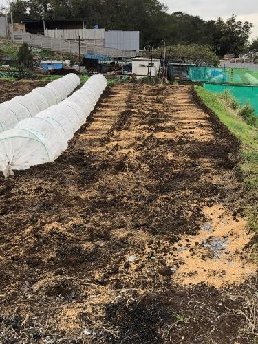このところ台風 低気圧の連続で土が湿ったまま 乾かないので 籾殻入れて耕します_c0222448_14032073.jpg