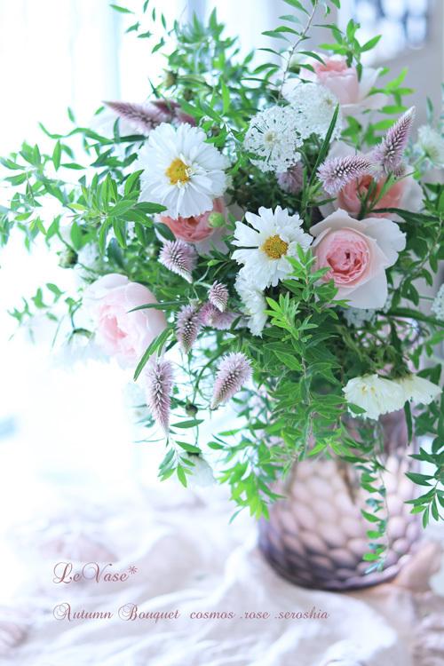 秋桜_e0158653_21192403.jpg
