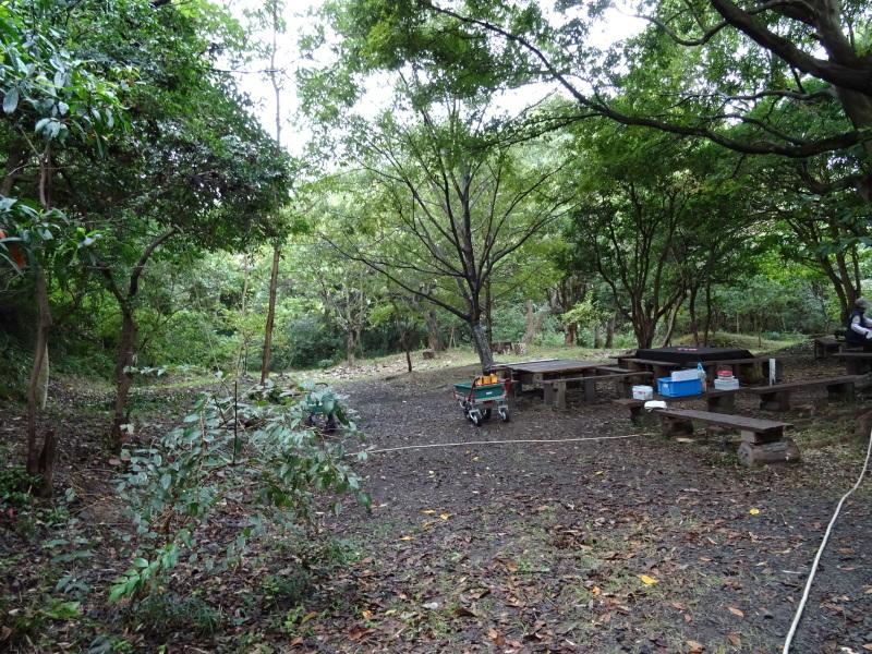 淡輪小学校1年生遠足「うみべの森探検」_c0108460_14462776.jpg