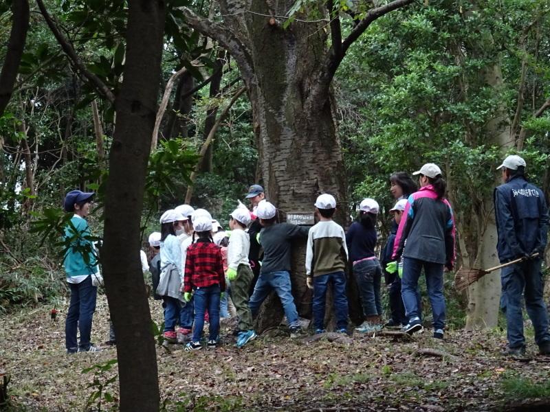淡輪小学校1年生遠足「うみべの森探検」_c0108460_15001692.jpg