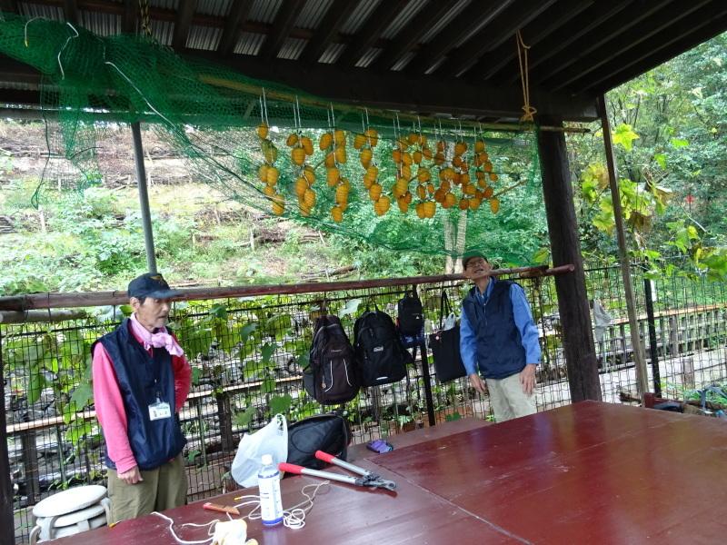 淡輪小学校1年生遠足「うみべの森探検」_c0108460_15071162.jpg