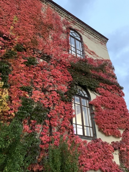 紅葉も見ごろです。_a0141072_18553703.jpeg