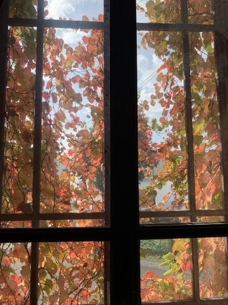 紅葉も見ごろです。_a0141072_18563981.jpeg