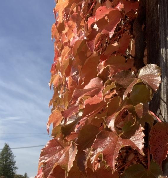 紅葉も見ごろです。_a0141072_19011493.jpeg