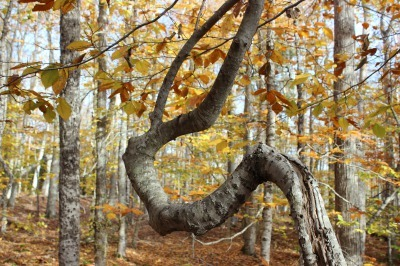 州立公園のブナ林_c0353373_02320707.jpg