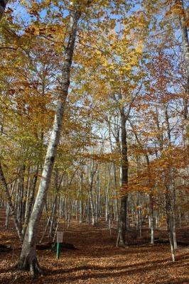 州立公園のブナ林_c0353373_02322603.jpg
