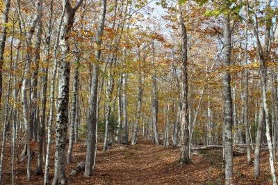 州立公園のブナ林_c0353373_02341407.jpg