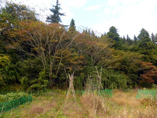 自然農の畑 10月中旬~下旬_d0366590_17245401.jpg