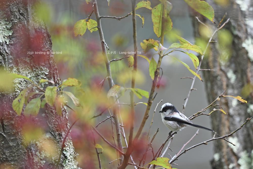 旬を外してしまったーーミズキに来る鳥_d0164892_23084105.jpg