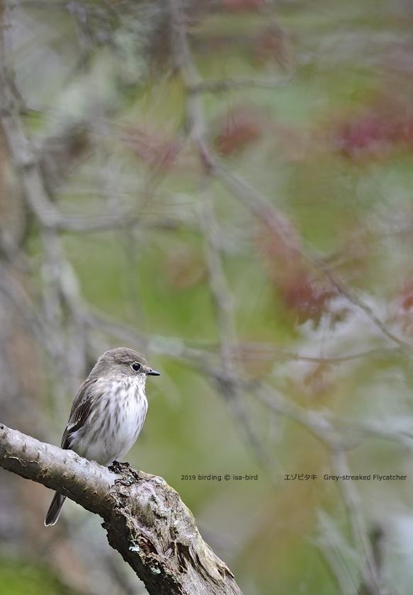 旬を外してしまったーーミズキに来る鳥_d0164892_23134270.jpg