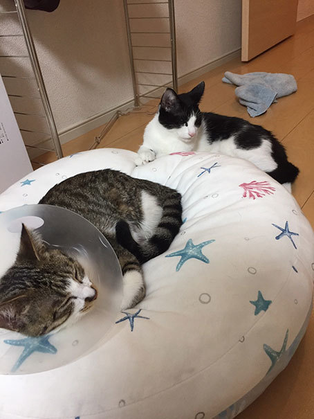 子猫のオモチャ&シュシュとアンジュ&ヨモギとフースケ&ミミちゃん通信_d0071596_00153682.jpg