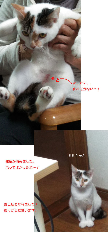 子猫のオモチャ&シュシュとアンジュ&ヨモギとフースケ&ミミちゃん通信_d0071596_00353011.jpg