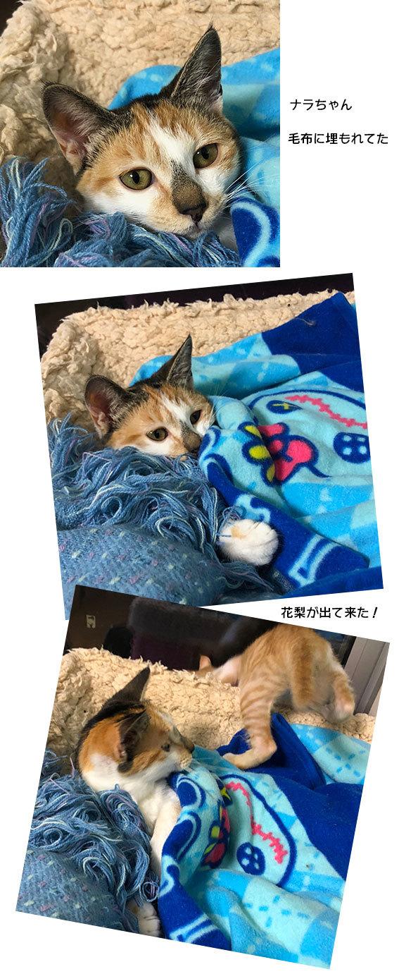 花梨とナラちゃんとアサリと健_d0071596_23175692.jpg