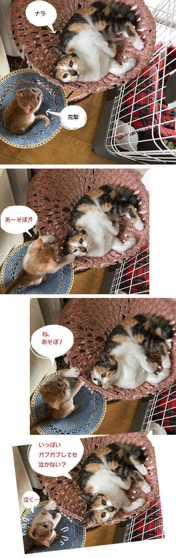 花梨とナラちゃんとアサリと健_d0071596_23241168.jpg