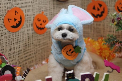 10月21日ご来店のワンちゃんです!!_b0130018_09333193.jpg