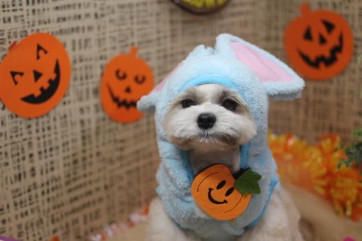 10月21日ご来店のワンちゃんです!!_b0130018_09334238.jpg