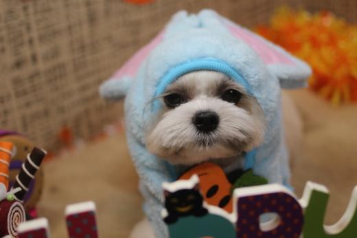 10月21日ご来店のワンちゃんです!!_b0130018_09334993.jpg