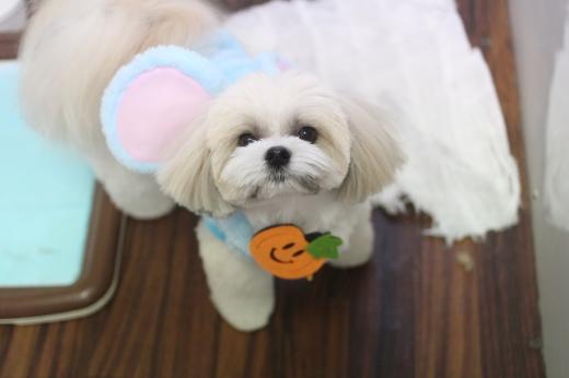 10月21日ご来店のワンちゃんです!!_b0130018_09335394.jpg