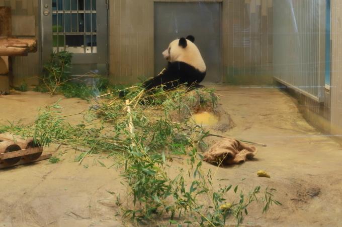 【上野動物園】part 1_f0348831_23535414.jpg