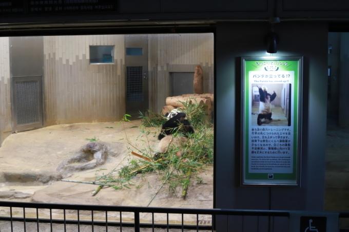 【上野動物園】part 1_f0348831_23535520.jpg