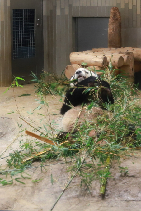 【上野動物園】part 1_f0348831_23535572.jpg