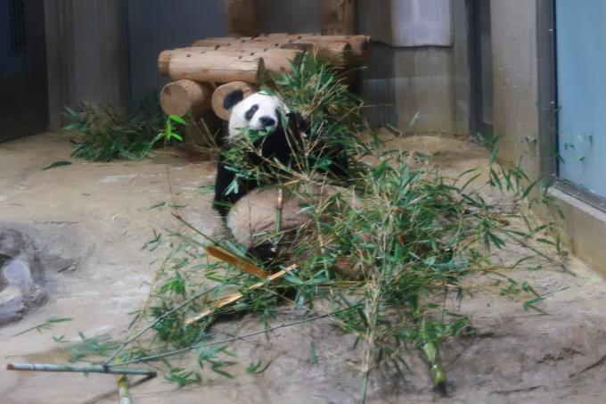 【上野動物園】part 1_f0348831_23540160.jpg