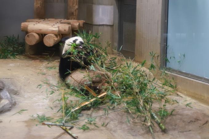 【上野動物園】part 1_f0348831_23540188.jpg