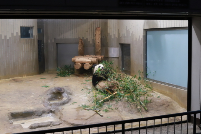 【上野動物園】part 1_f0348831_23540206.jpg