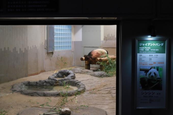 【上野動物園】part 1_f0348831_23540263.jpg
