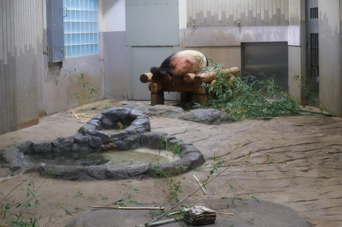 【上野動物園】part 1_f0348831_23540694.jpg