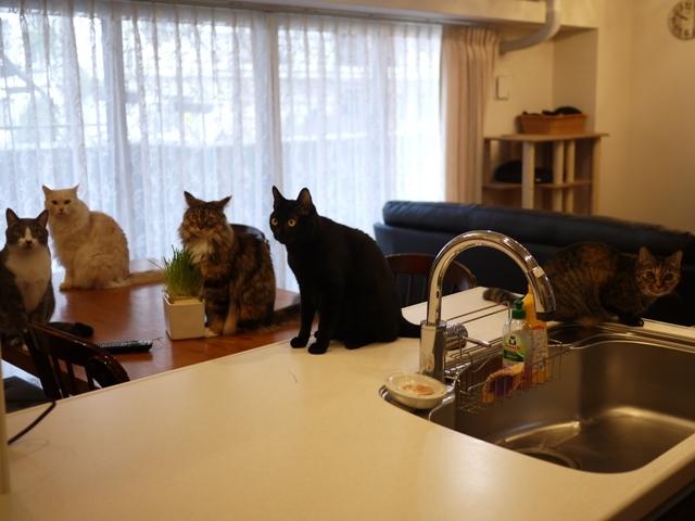 猫のお留守番 天ちゃん麦くん茶くん〇くんAoiちゃん編。_a0143140_17052582.jpg