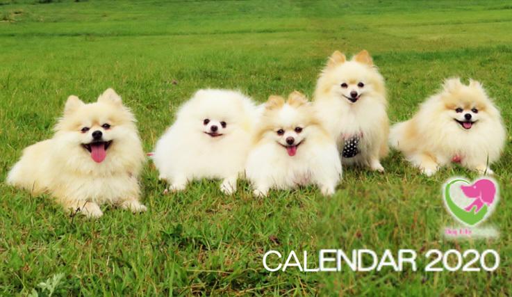 来年のカレンダー。:里親さん募集中。フレンチブルドッグ。_f0372146_14454282.jpg