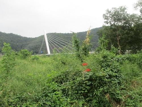 長良川の河川工事-なんだかヘンだよ_f0197754_00013239.jpg